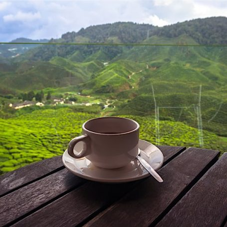 The Best Travel Destinations for Tea Lovers