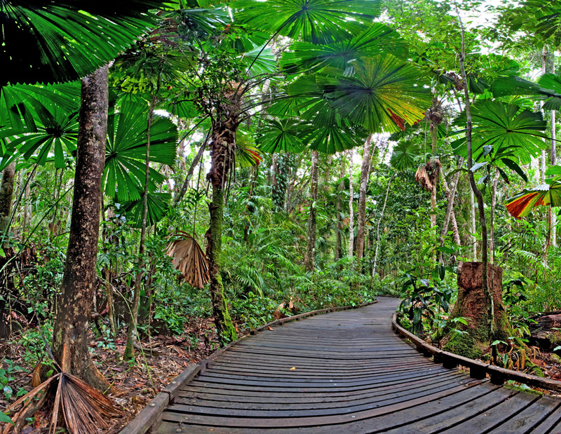 Fun Experiences In and Around Cairns You Probably Didn't Know About - Cape Tribulation