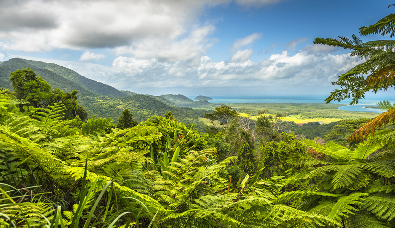 Fun Experiences In and Around Cairns You Probably Didn't Know About - Daintree