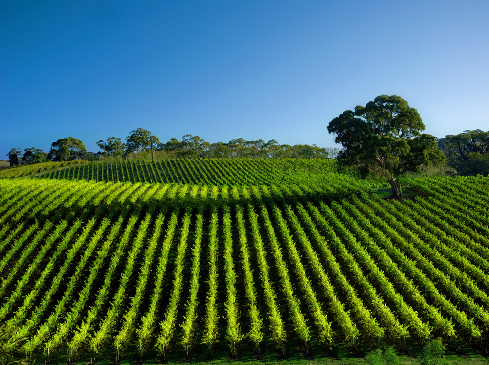 The 10 Attractions to Visit When in Adelaide - Barossa Valley