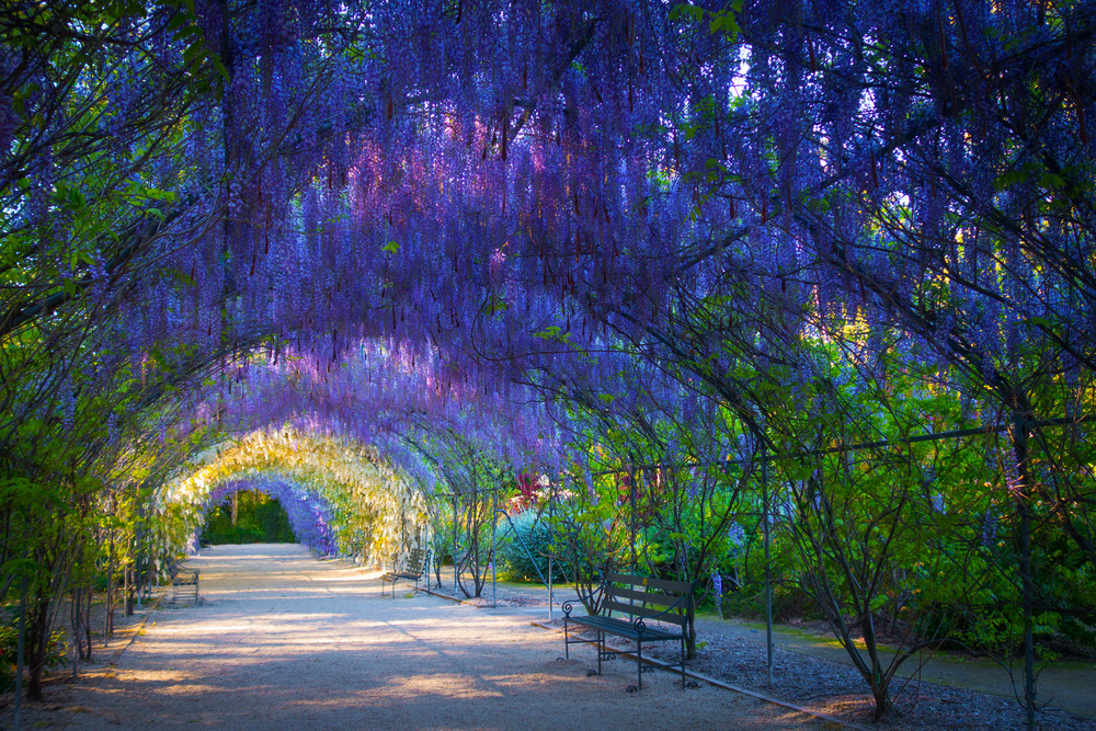 The 10 Attractions to Visit When in Adelaide - Royal Botanic Garden