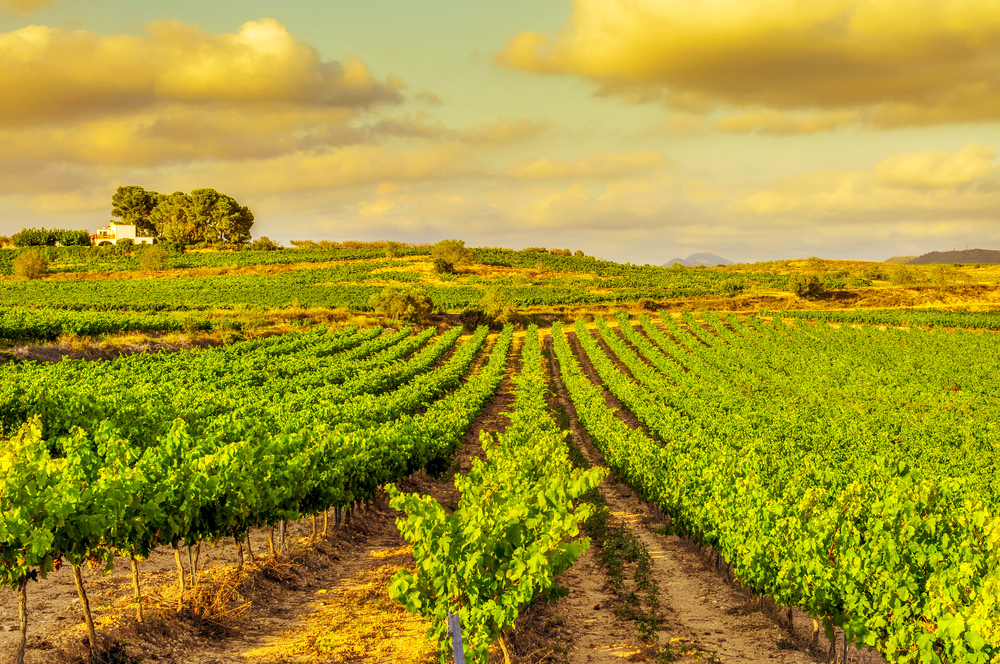 8 Exciting Wine Regions to Explore – from France to Moldova - Catalonia in Spain