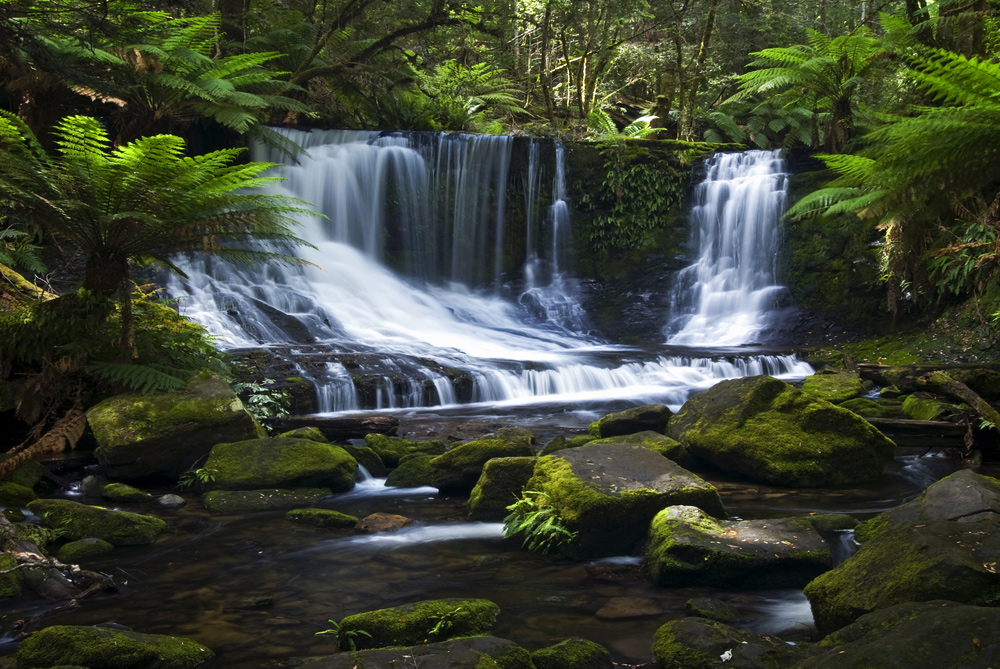 10 Attractions to See in Hobart and Surrounds - Mt. Field National Park