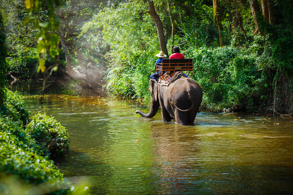 7 Amazing Adventures to Have in Thailand this 2018 - Elephant Ride
