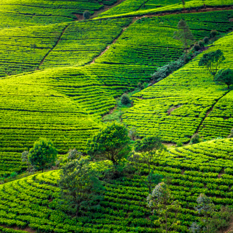 9 Compelling Reasons to Visit Sri Lanka This Year
