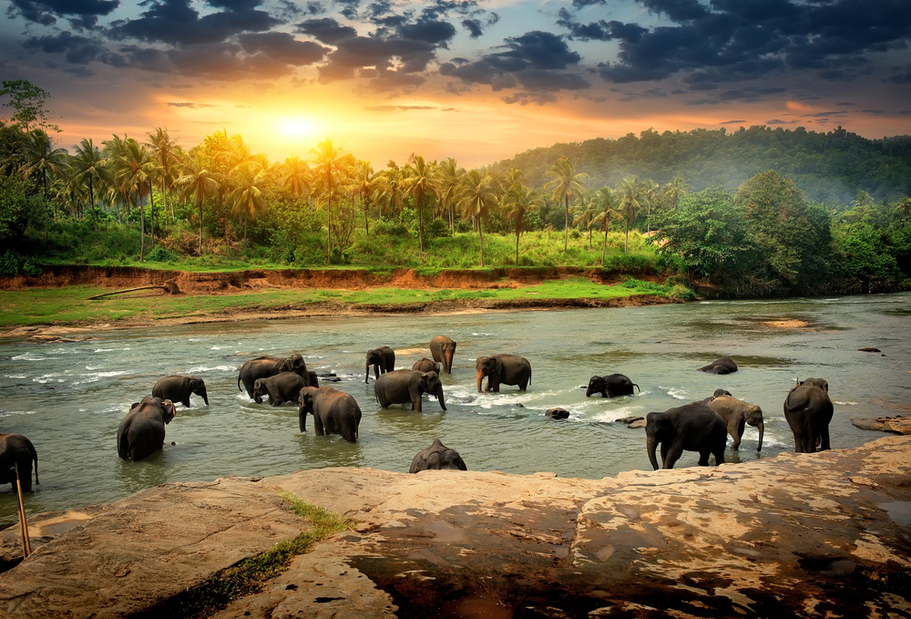 9 Compelling Reasons to Visit Sri Lanka This Year - Elephants in Sri Lanka
