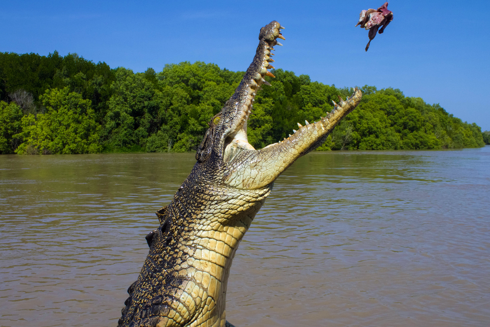The 10 Best Things to Do in Darwin - Jumping Crocodile tour