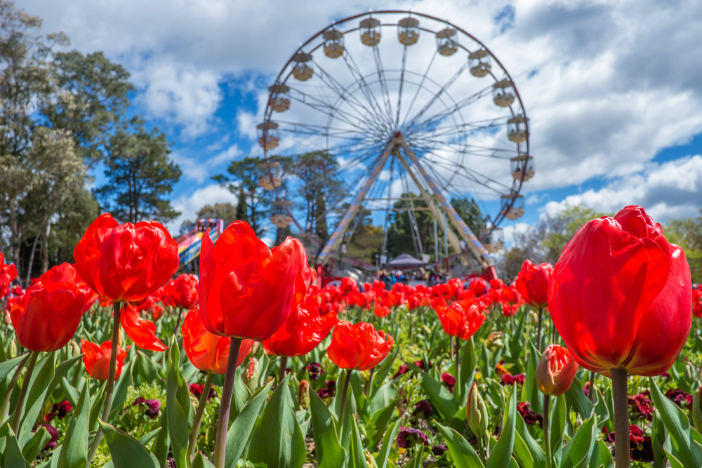 12 Must-try Activities in Canberra - Floriade