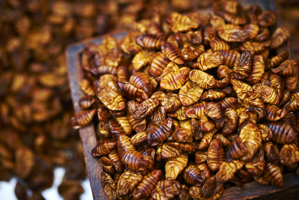 15 Weird Delicacies from Around the World that Will Surely Gross You Out - Beondegi - Silkworm Pupa
