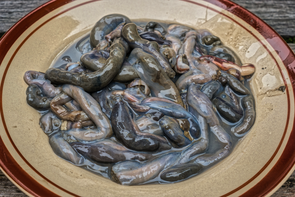 15 Weird Delicacies from Around the World that Will Surely Gross You Out - Tamilok - Woodworm