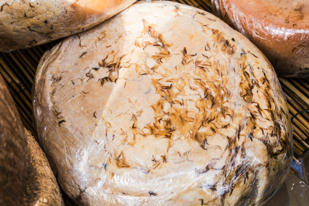 15 Weird Delicacies from Around the World that Will Surely Gross You Out _ Casu Marzu - Sardinian cheese with live maggots