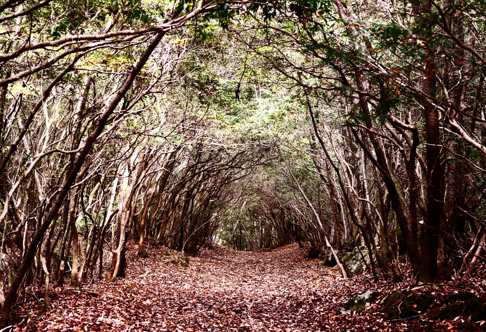 Terrifying Places that Will Surely Scare the Wits Out of You - Japan Suicide Forest