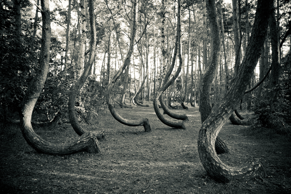 Terrifying Places that Will Surely Scare the Wits Out of You - Poland Crooked Forest