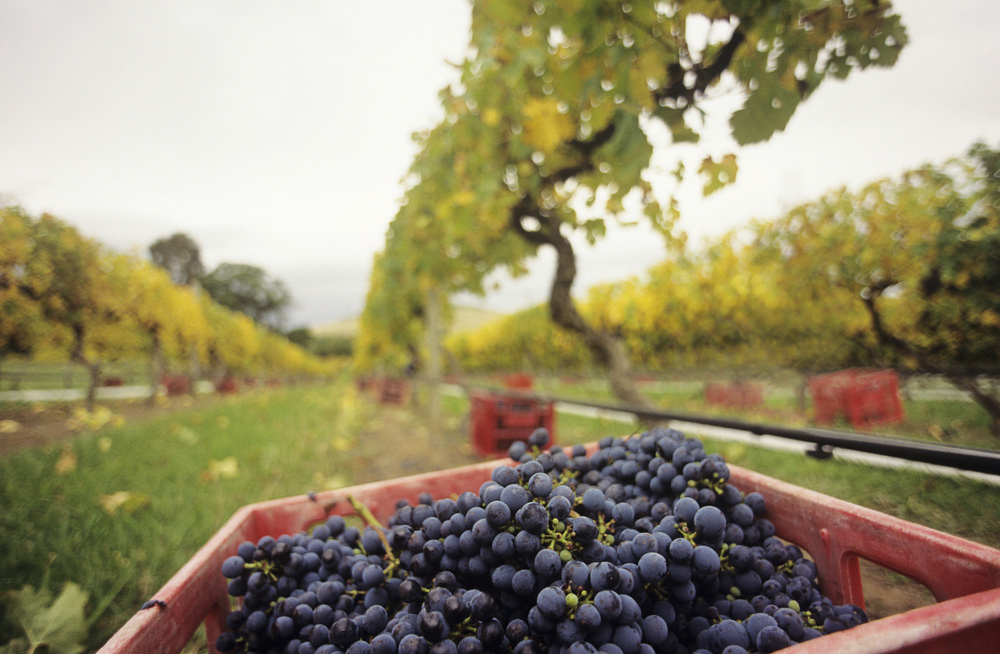 Melbourne City Guide - How to Spend 72 Hours in Melbourne - Yarra Valley Wine-Producing Region
