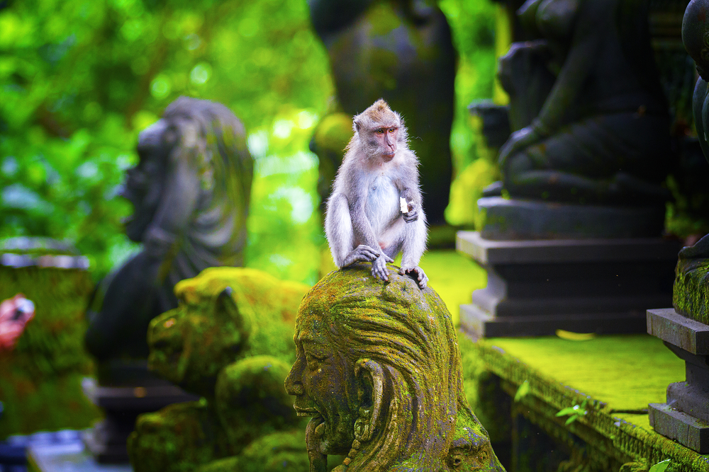 City Guide - Bali in 5 Days - Bali Itinerary - Sacred Monkey Forest