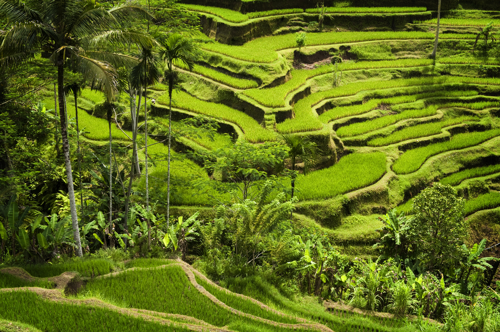 City Guide - Bali in 5 Days - Bali Itinerary- Tegallalang Rice Terraces