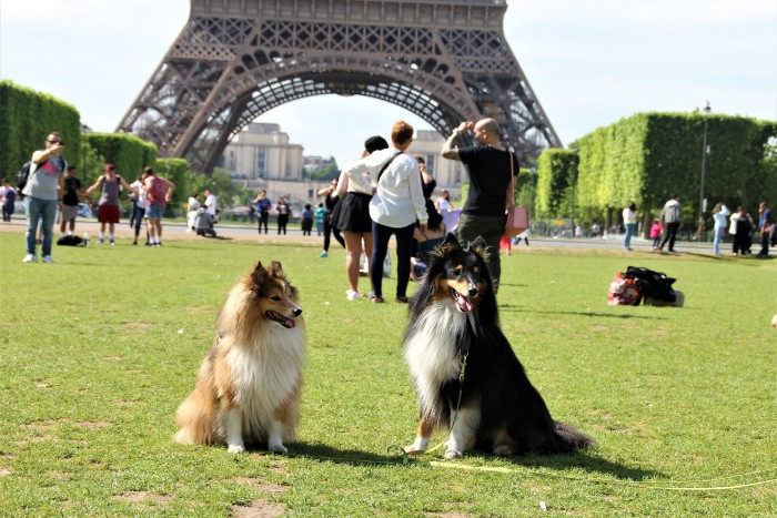 two dogs on the grass with the Eiffel Tower at the back
