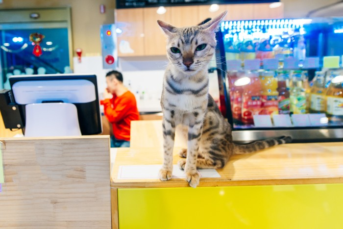 Seoul: a cat on the restaurant's counter
