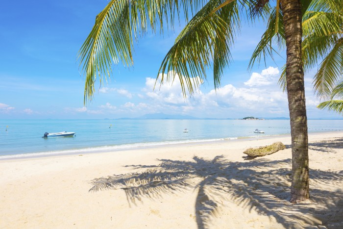 white sand, blue waters and skies, and a coconut tree